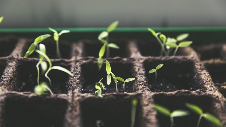 Verduras imprescindibles en tu huerto urbano